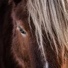 Pony portret