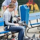 duiven-voeren-in-weesp-3493