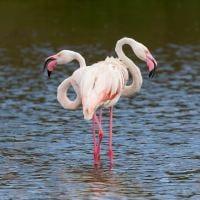 Flamingo's in Arusha National Park, Tanzania