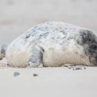 dune2015-zeehondenpup-5048