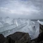 kruiend-ijs-oostvaardersdijk-2496