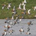 vliegende-gruttos-landje-van-geijsel-1029