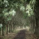 Laan met bomen