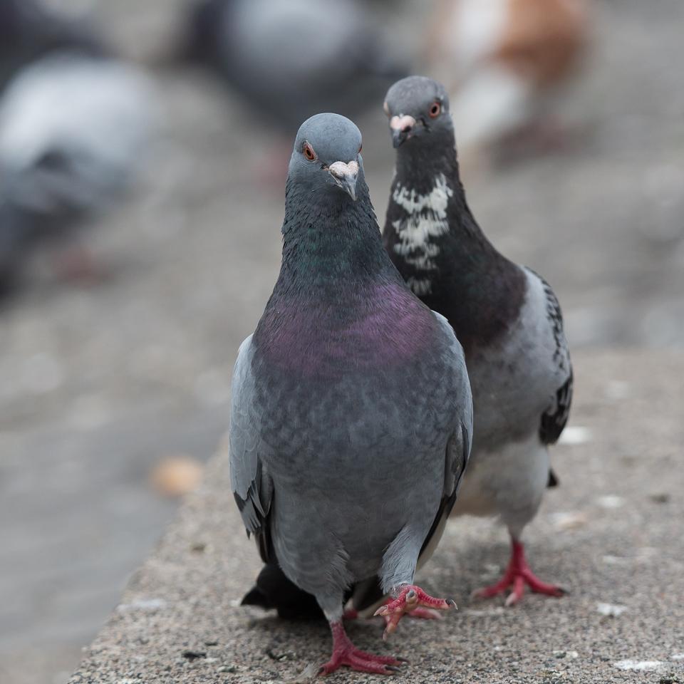 duiven-3380.jpg
