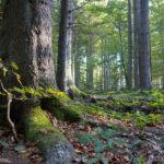 Fotograferen in het Bayerischer Wald