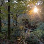 Zonsondergang in het Bayerischer Wald