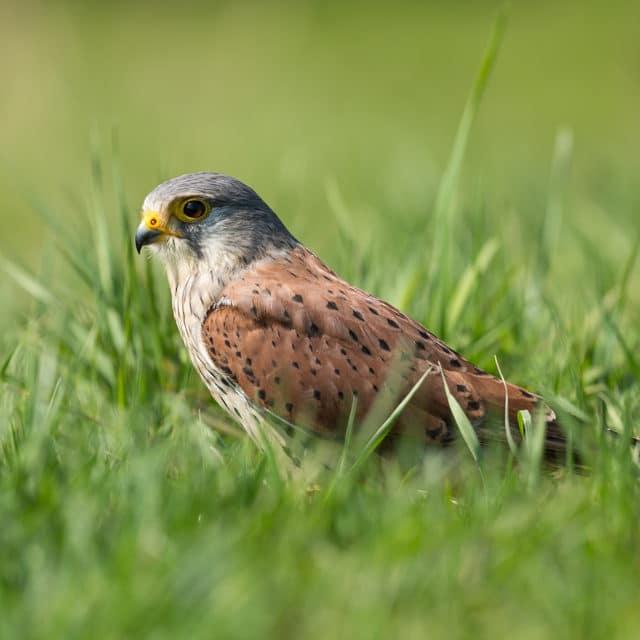 Roofvogels Fotograferen