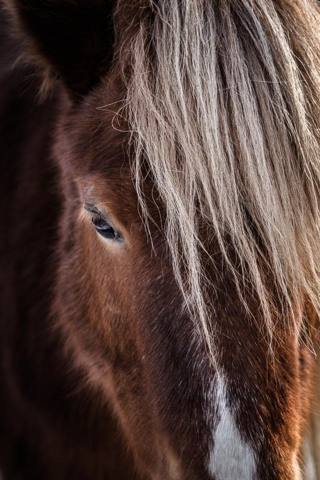 pony-2208.jpg